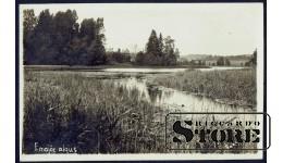 Коллекционная открытка Заросший пруд