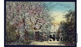 Старинная открытка Цветущий Парк