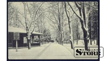Коллекционная открытка Российской Империи Зимняя аллея
