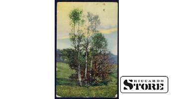 Старинная открытка времён Ульманиса Березы на опушки